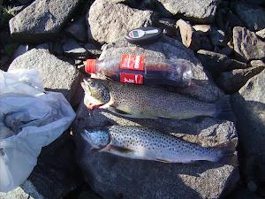Fisk og cola