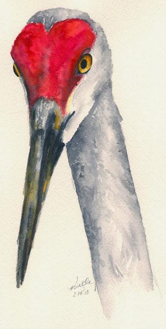 Sandhill Crane (Grus canadensis) watercolor painting