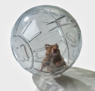 Contoh Hamster Ball
