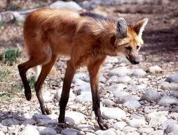 Strange Animals You Won't Believe Aren't Photoshopped  أغرب الكائنات ليس عمل فوتوشوب Part3