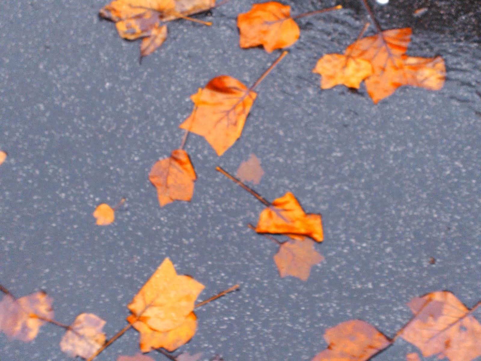 """foglie """"testa di gatto"""""""