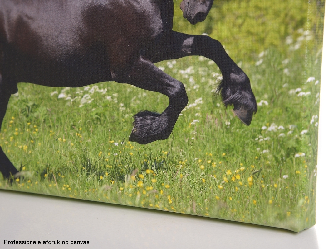 Test: Foto op canvas    © Hypo Focus