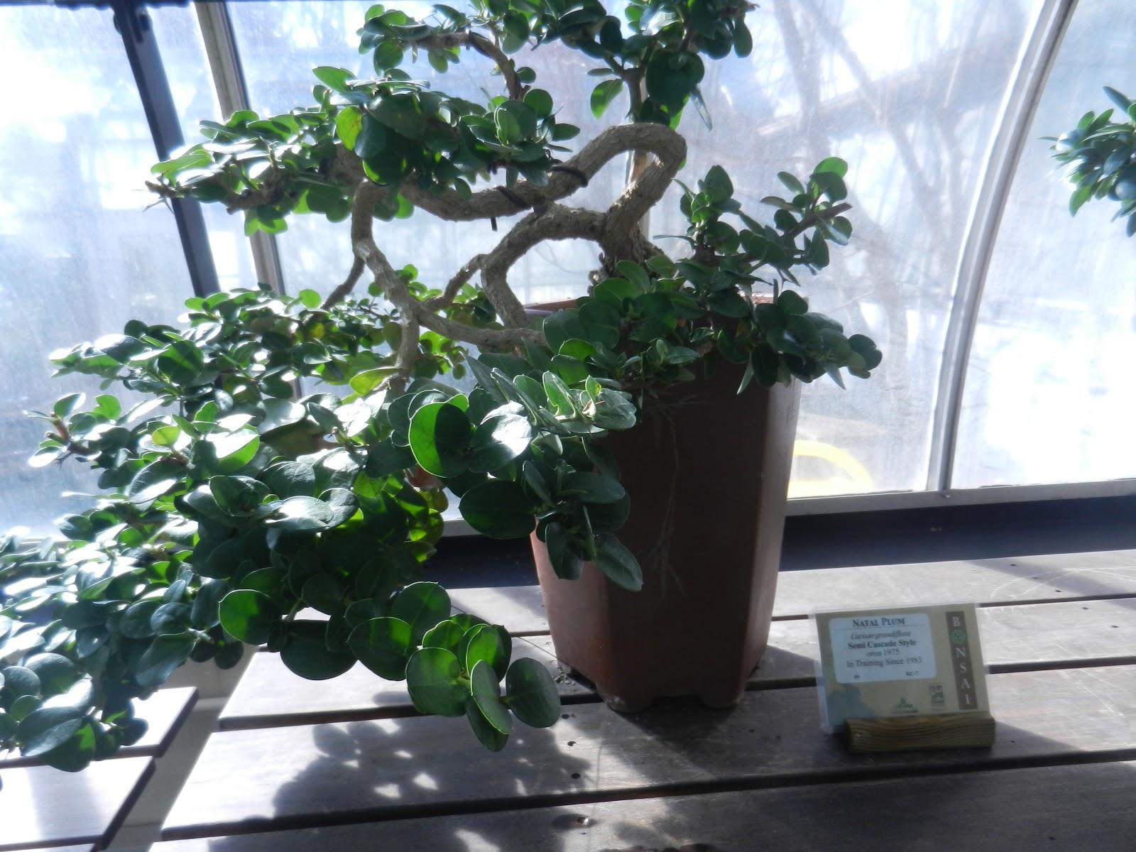 Beauty Of Everyday Life Bonsai