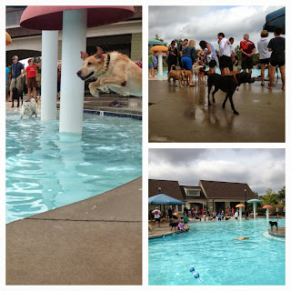"""Briar Chapel's 4-Legged Residents Enjoy Annual """"Pups in the Pool"""" Event"""