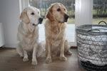 Chippen och Svea