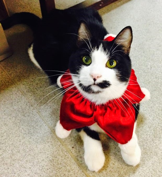 Martin kitty