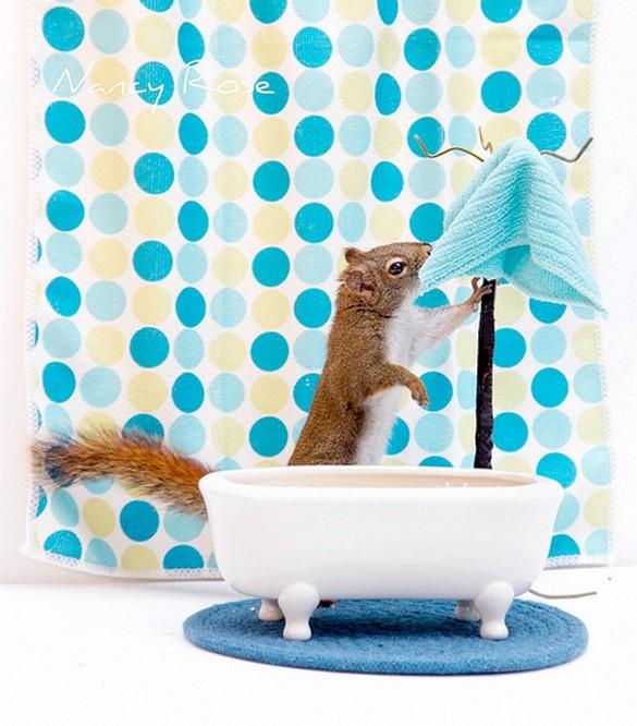Creative photos of squirrels