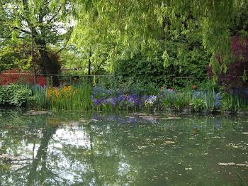 massif bleu jardin des Nymphéas