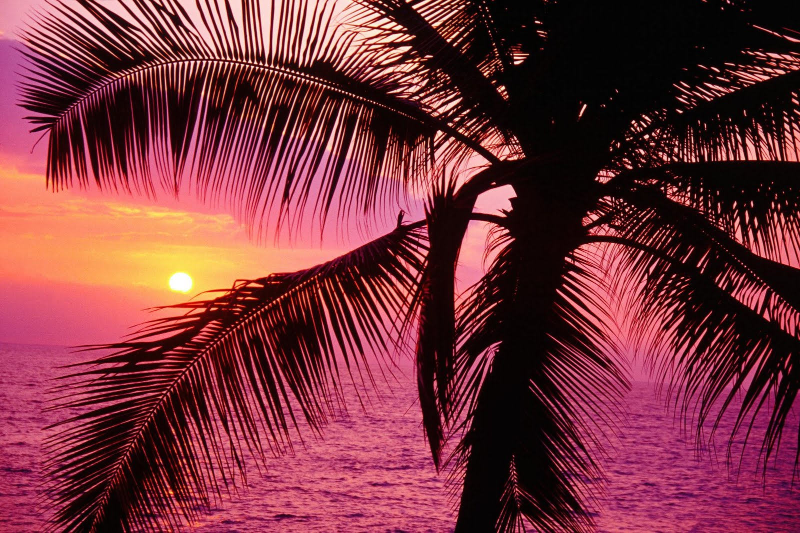 http://1.bp.blogspot.com/-8aMj040CpAo/Tdbbn4qkyrI/AAAAAAAAAVU/_1lv8rjb2Lc/s1600/sunsetmantra+%252820%2529.jpg