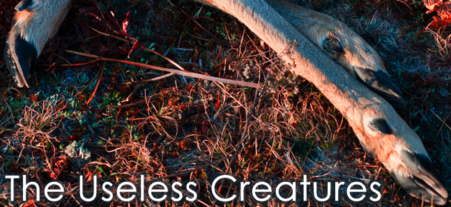 The Useless Creatures