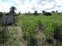 Vende-se uma área de terra na Fazenda Caraíba Grande, as margens da BA – 417