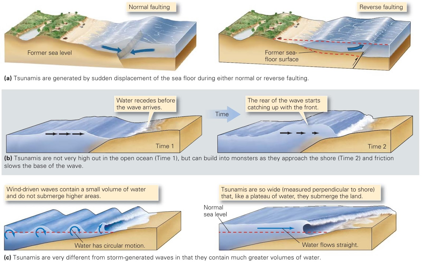 the formation of tsunamis and earthquakes 1earthquakes 1 according to dictionaryreferencecom an earthquake is a: series of vibrations induced in the earth's crust by the abrupt.