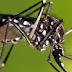 Sem larvicida, Feira precisa pedir ajuda para combater chikungunya. Agentes sofrem para combater o mosquito.