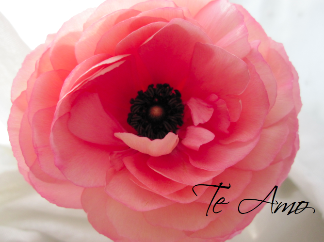 Te Amo Floral Design