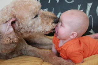 Funny Dog And Baby Kissing