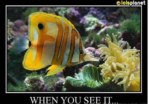 When you closely see this fish,you'll see what is actually written on it. its kind of cool for having that fish,funny animal picture.