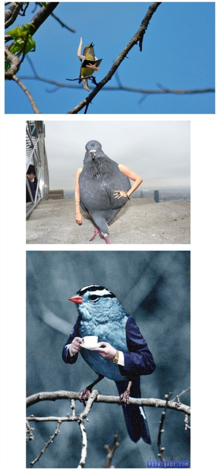 gambar burung ada tangan manusia