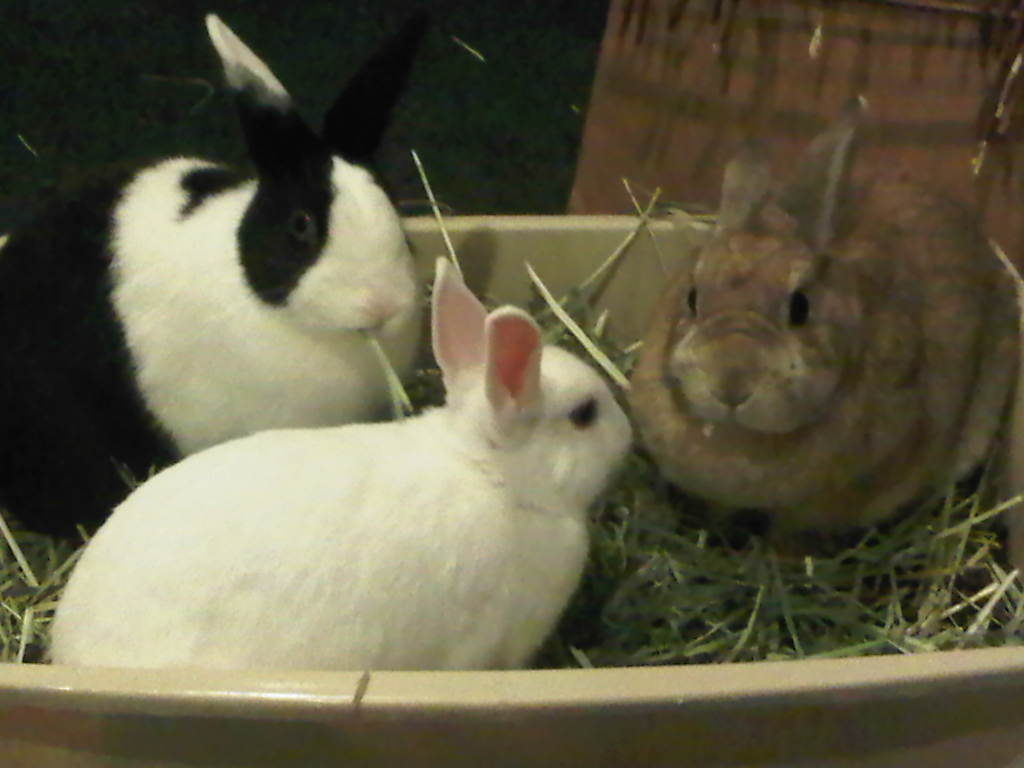 rabbit care Domestic rabbits can make wonderful pets, but they do require lots of special care we've got tips to help choose, adopt, and raise a rabbit want to keep your.