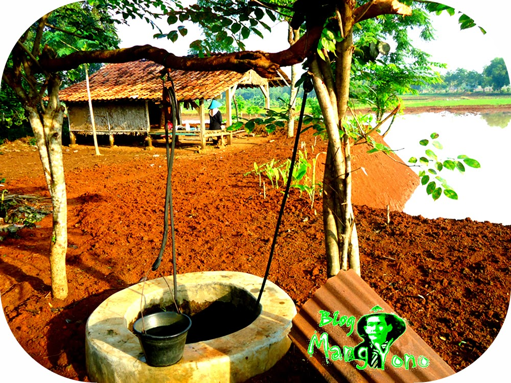 Cara menanam kacang tanah di kebun atau sawah