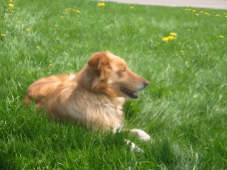 how to bring grass back to life from dog urine