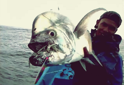Gila Mancing Ikan Monster Giant Trevally ( Ikan GT )
