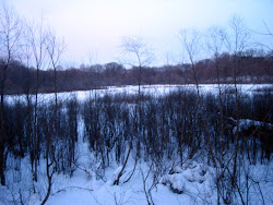 Bog in winter