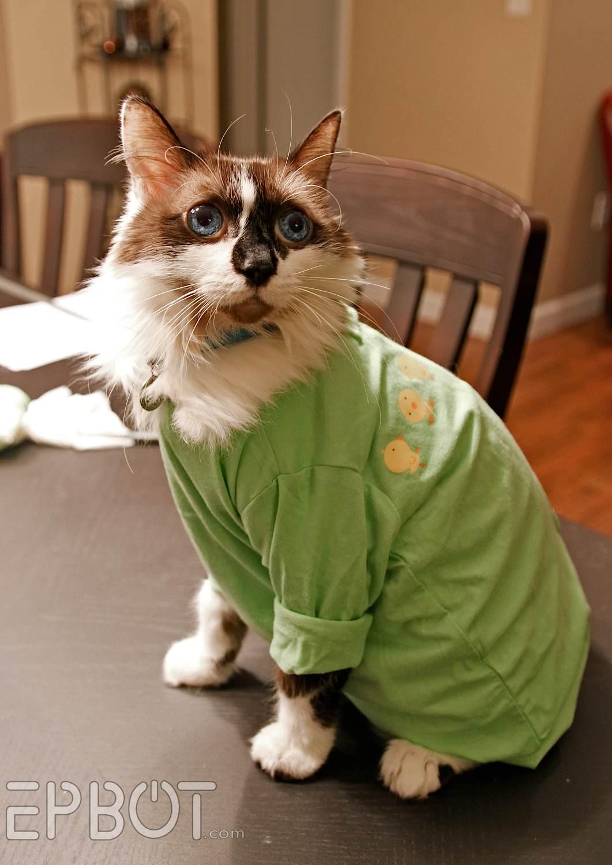EPBOT: Quick & Easy DIY Cat Onesie (For Over-Grooming Kitties)