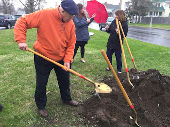 Former Mayor Tom Walker Helps at  Arbor Day Planting