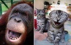 smiješne slike totalni smijeh