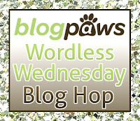 Enjoy Wordless Wednesday with Blogpaws!