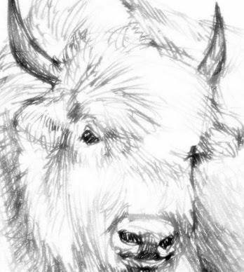 Book #1 The Last White Buffalo Hide