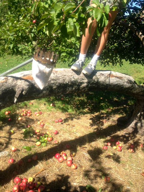 feet in apple tree