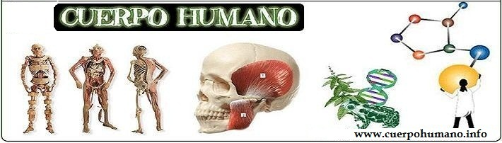 CUERPO HUMANO