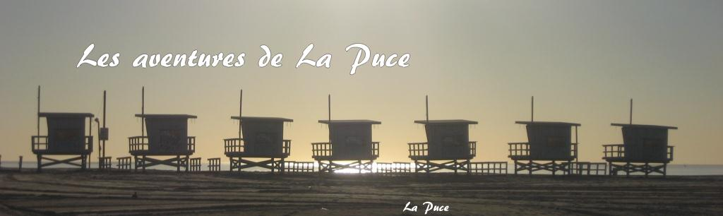 The adventures of LaPuce