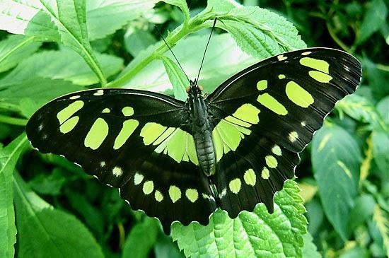 Meryem Uzerli: Top 10 Most Beautiful Butterflies 10 Most Beautiful Butterflies
