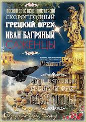 Саженцы грецкого ореха Иван Багряный