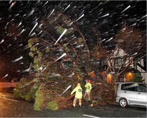 Wellington_storm_damage_photo