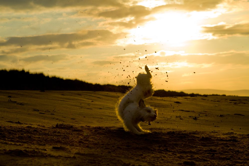 9. Yoga Dog