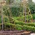 Weidengerüste für den Gemüsegarten