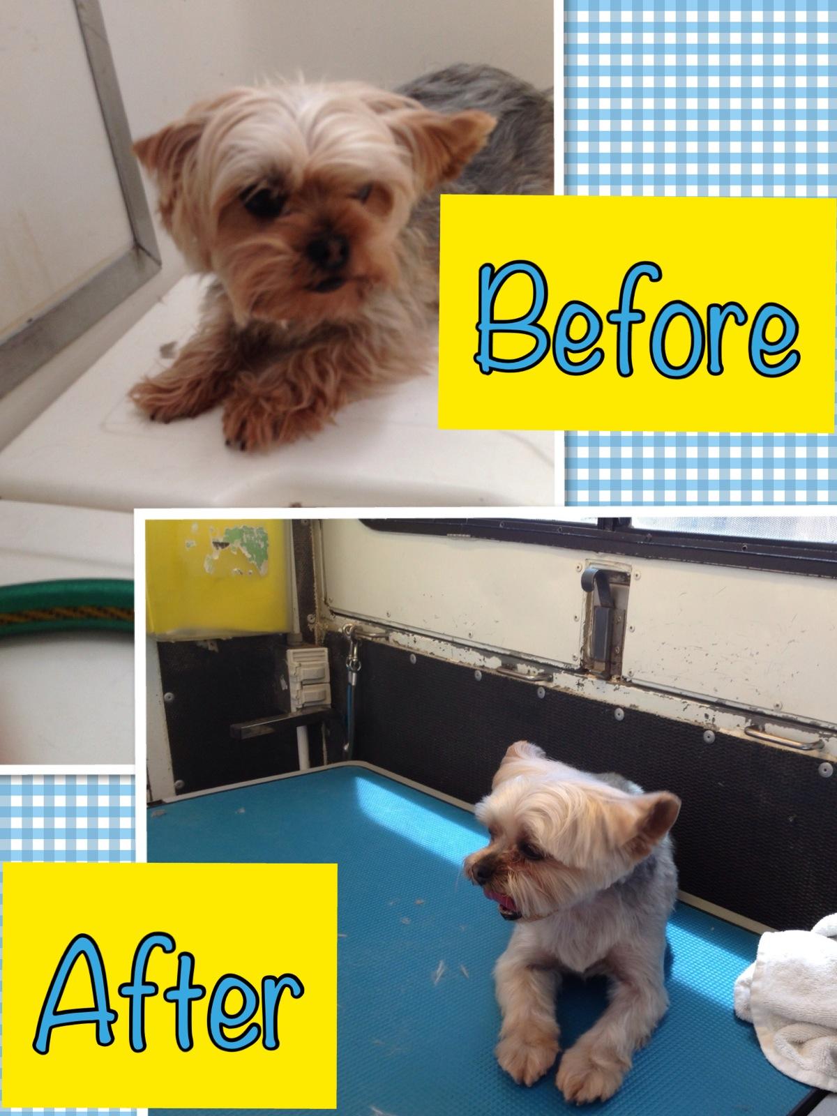Dog Grooming Houghton Mi