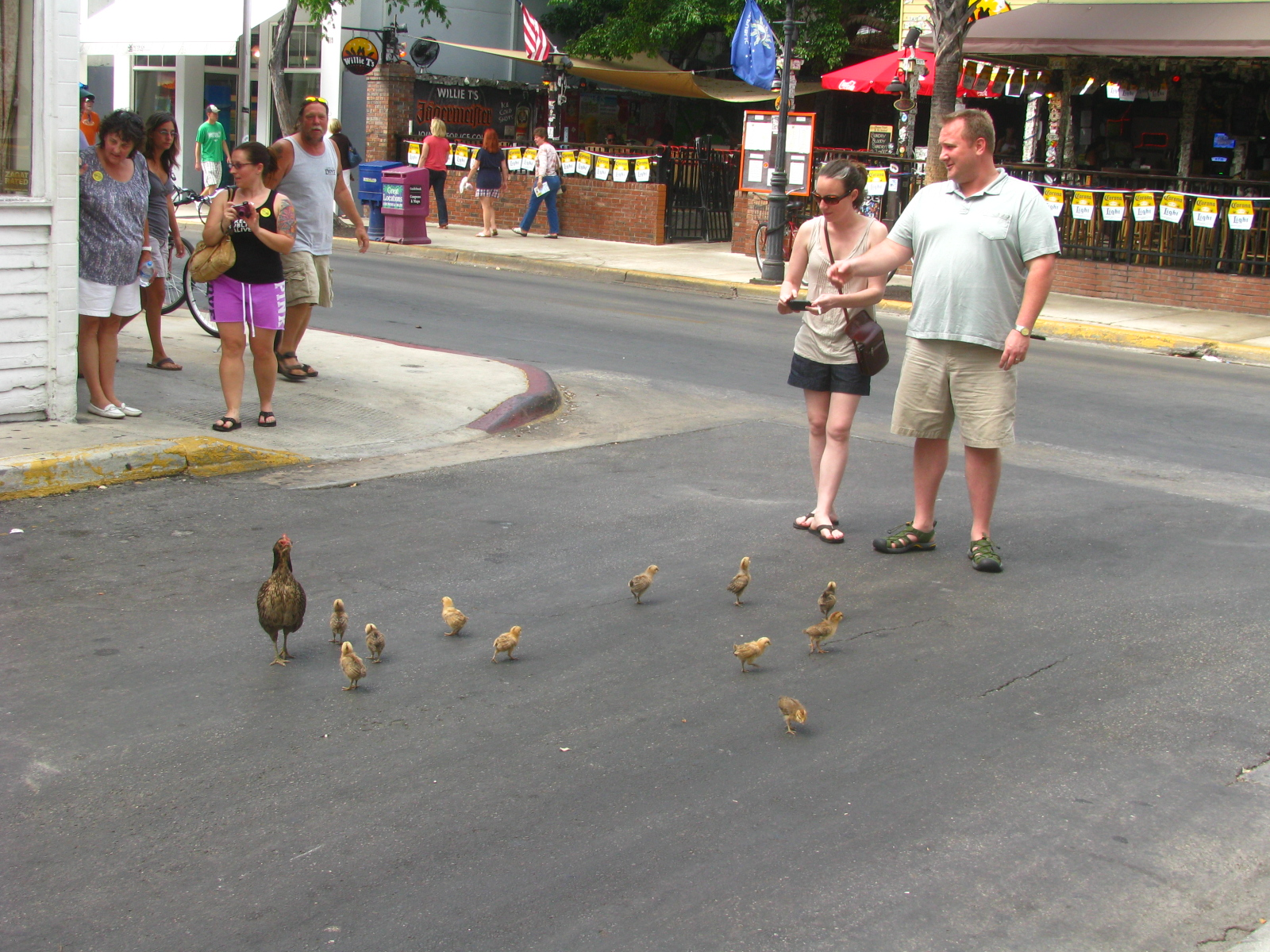 Key West Diary: Key West Chickens