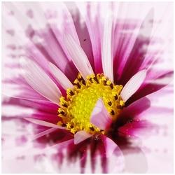 fleur1 dans Santé (166)