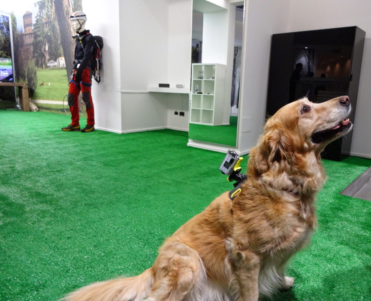 sony action cam, sony action cam dog, action cam cane