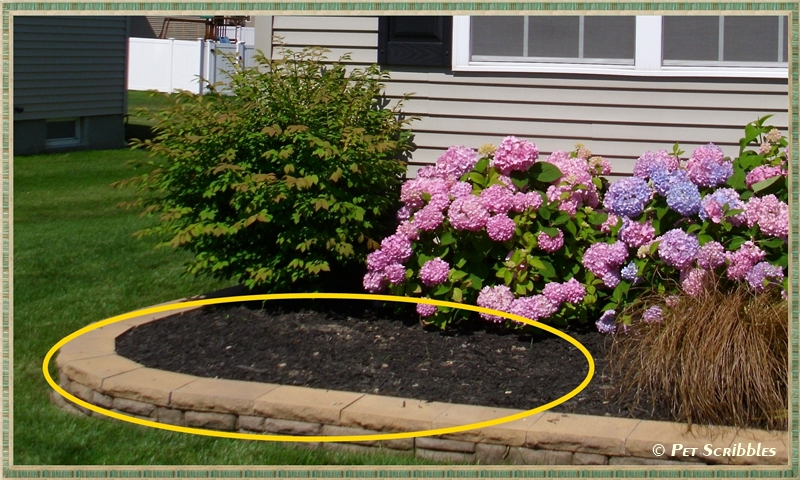 filling in a bare garden spot with perennials