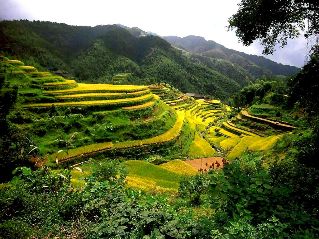 Rice terraces in southeast asia and china facts pod for Where is terrace