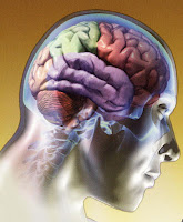 A Memória e o Exercício Físico