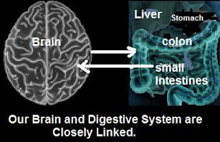 picture of brain connection to gut