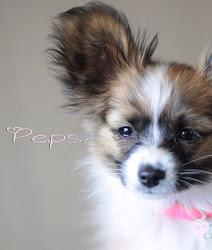 Pepsi Pepp.