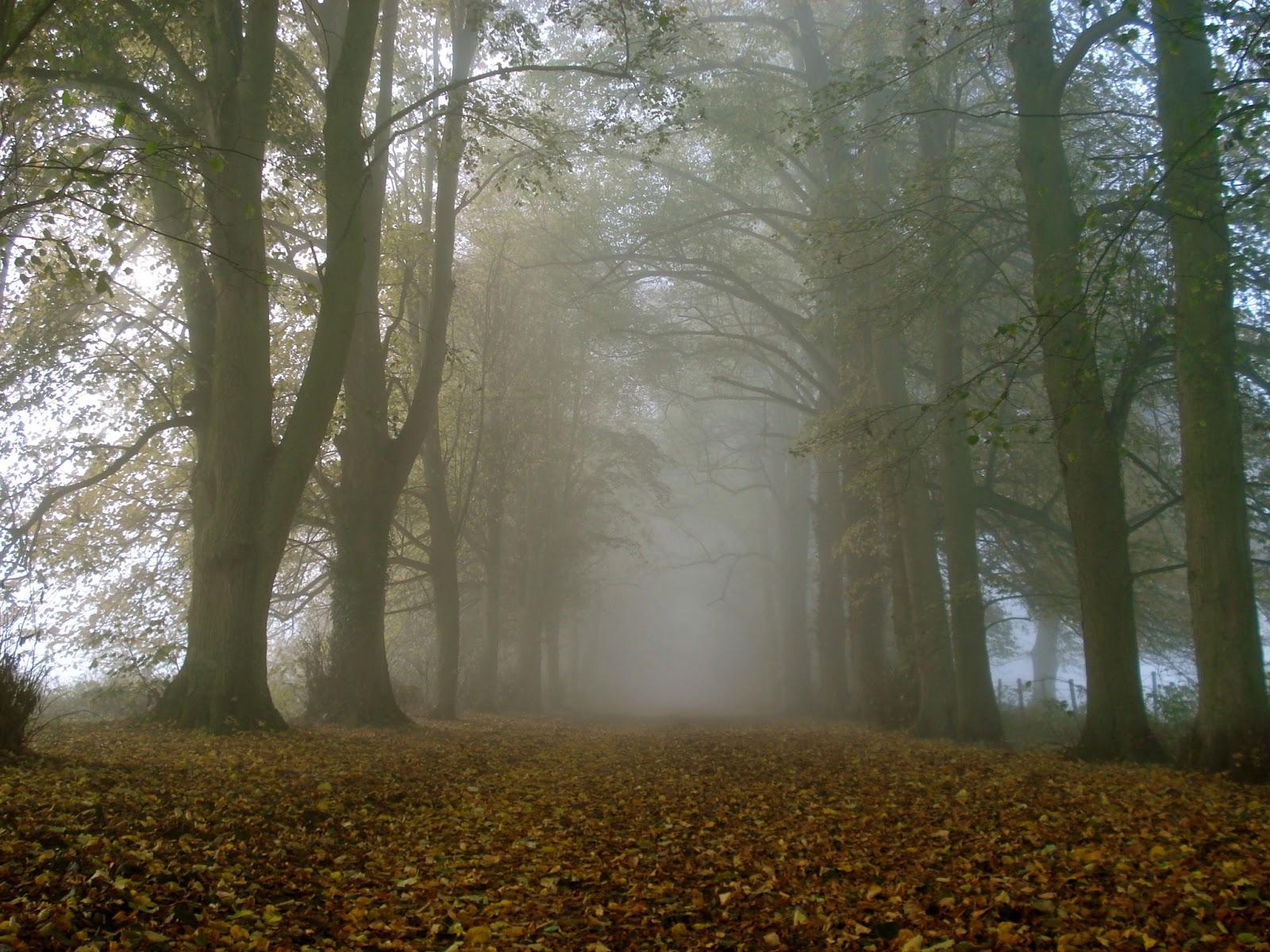 Rüyada Ağaç Kökü Görmek Ne Demek Anlamımı Öğren