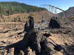 Horse Prairie Fire returns to local control